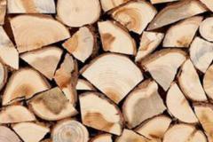Упрощен порядок заготовки древесины для жителей Ленинградской области